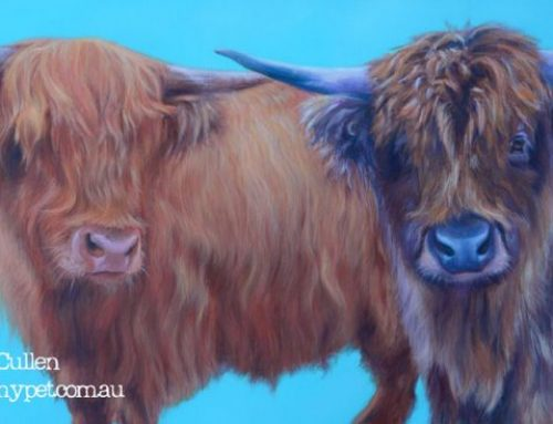 Bart & Fingal – Highland Cows Pet Portrait