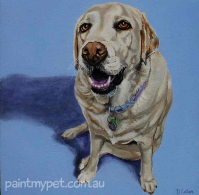 Dog portrait of a Golden Labrador