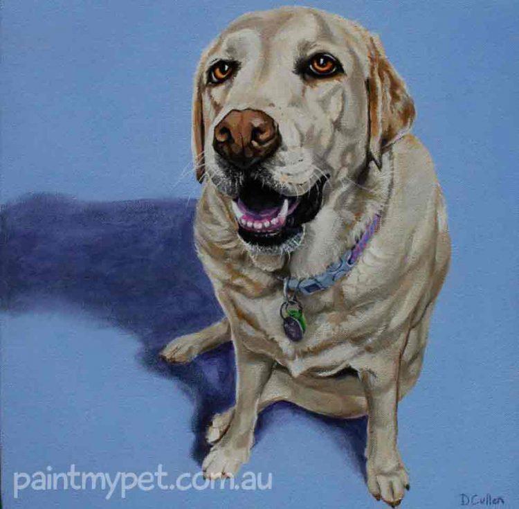 Dog portrait of a Golden Labrador