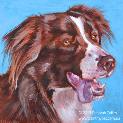 Dog Portrait of a brown Border Collie