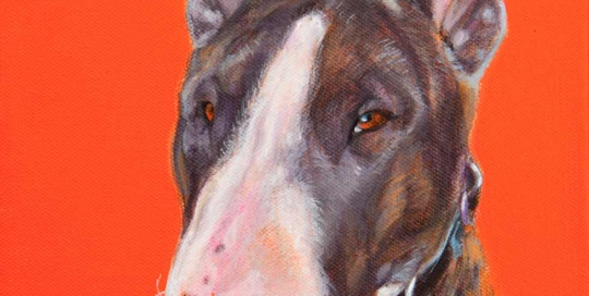 Bull Terrier Pet Portrait
