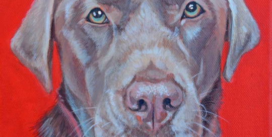 Pet portrait of a chocolate Labrador