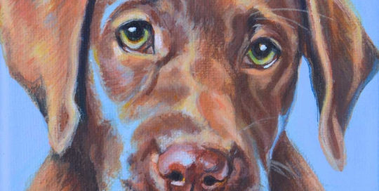 Dog Portrait of a brown Labrador puppy
