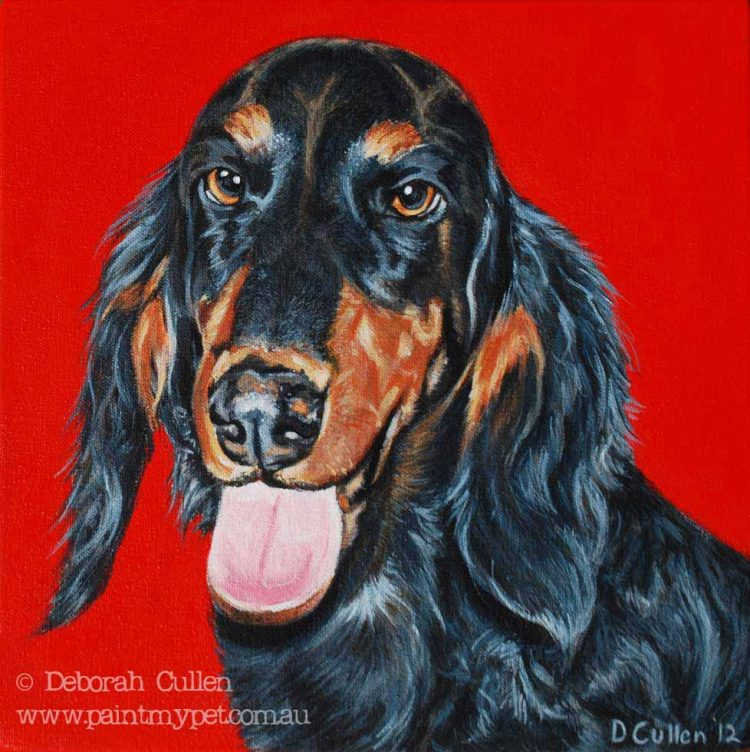 Dashshund Pet Portrait