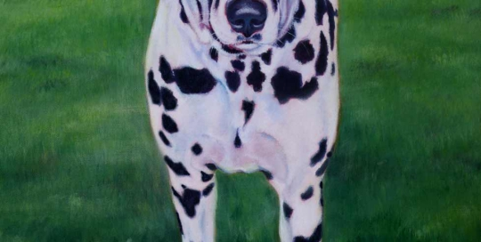 Dalmation pet painting