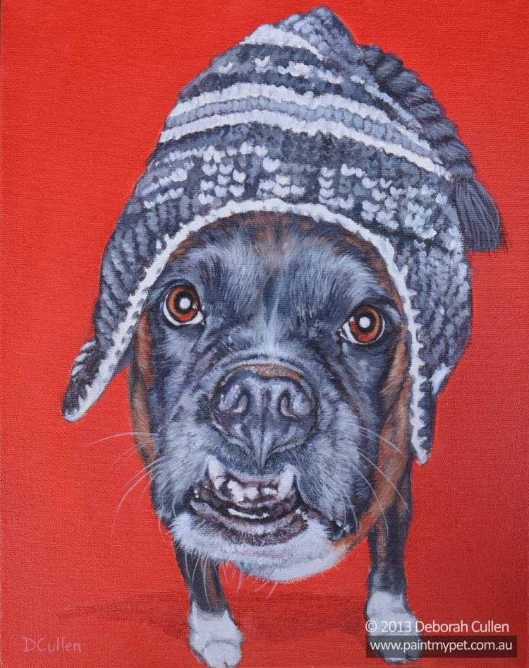 Dog portrait of a Boxer