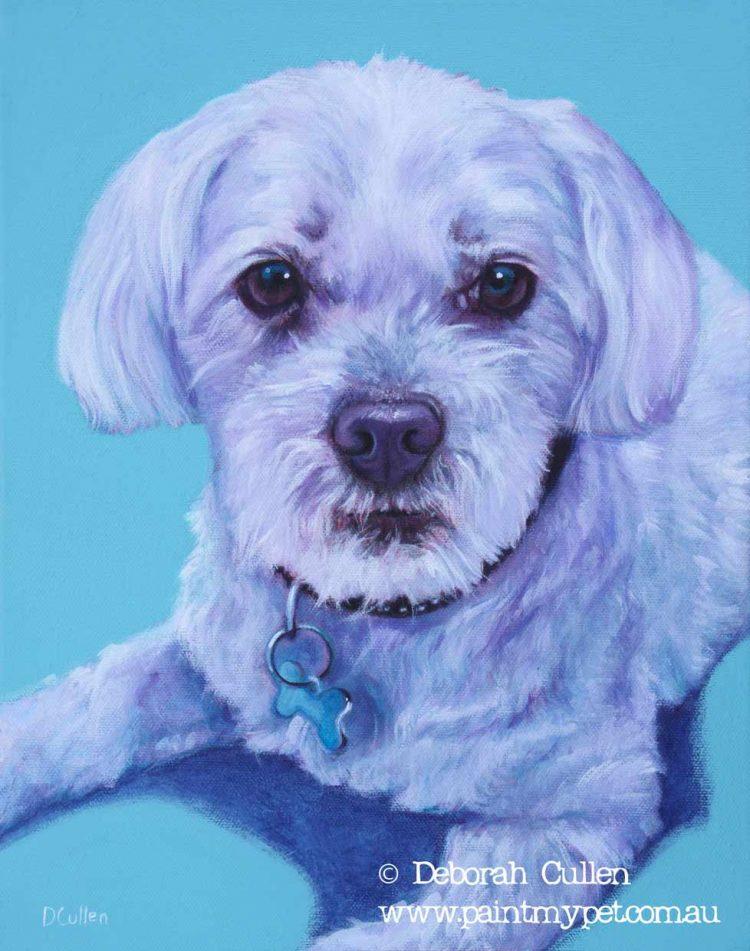 Maltese Terrier portrait