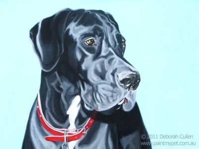 Black Great Dane portrait