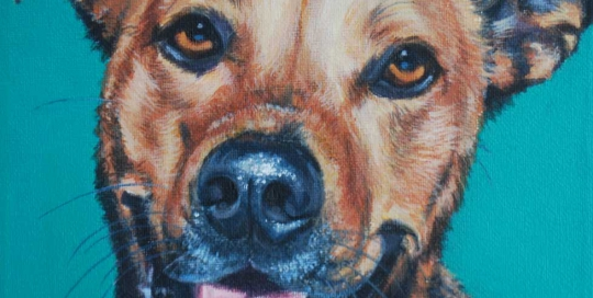 Pet Portrait of a Ridgeback X
