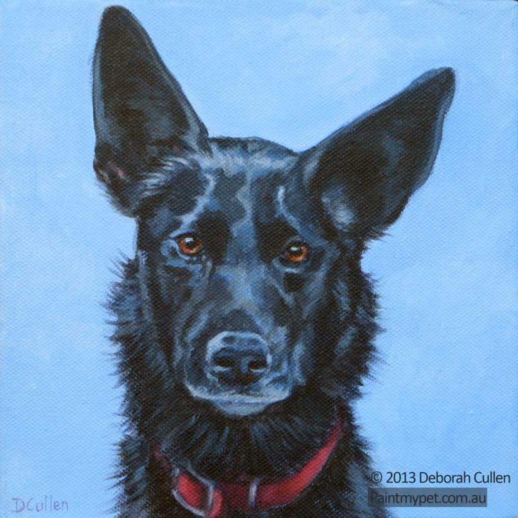 Pet portrait of a Kelpie