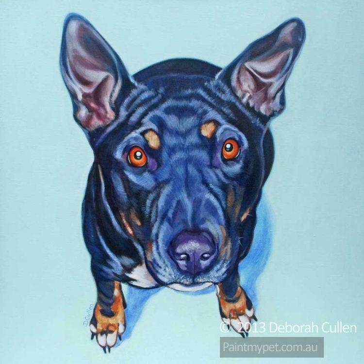 Dog portrait, Staffy