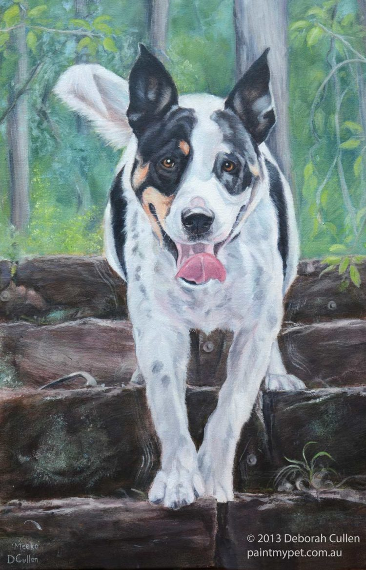 Pet portrait of an American Staffy X Border Collie
