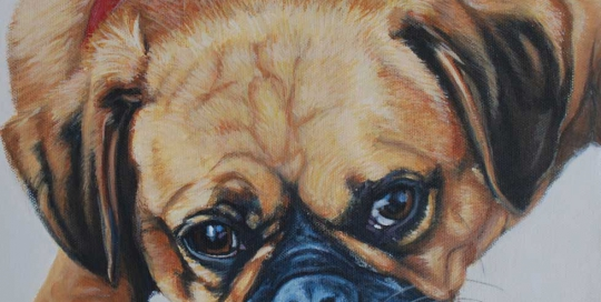 Pugalier Pet Portrait
