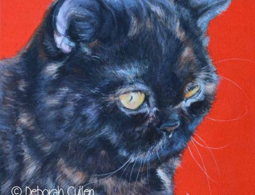 Mia – Tortoiseshell Exotic Shorthair Cat Portrait