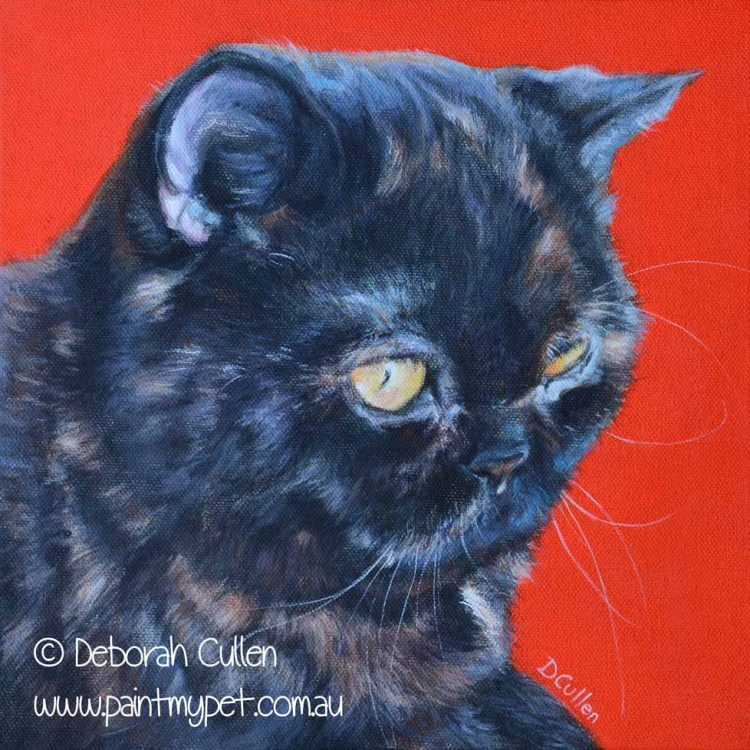 Exotic shorthair cat painting