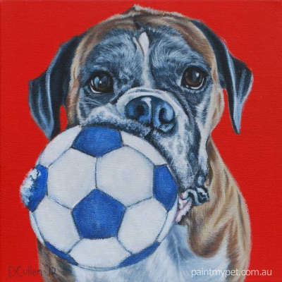 Pet portrait of a Boxer