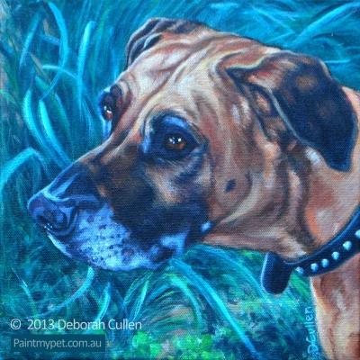 Rhodesian Ridgeback dog portrait