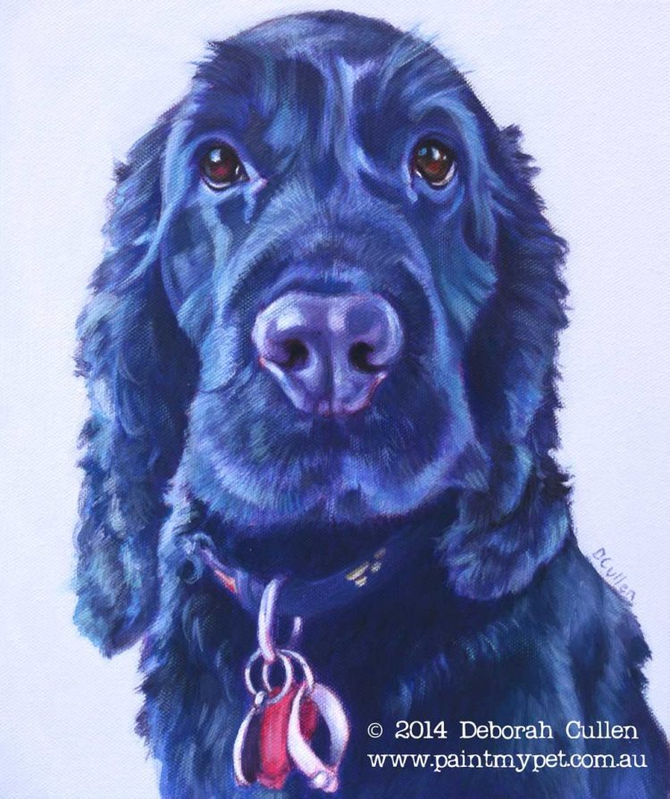 Cocker Spaniel Pet Portrait
