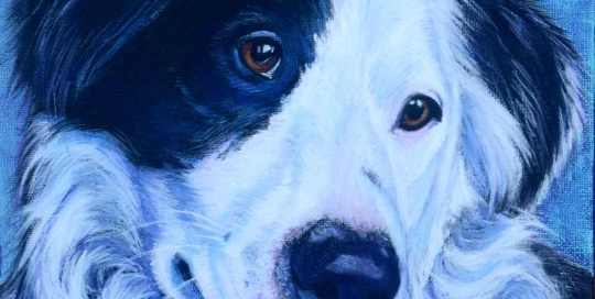 Black and white Border Collie portrait