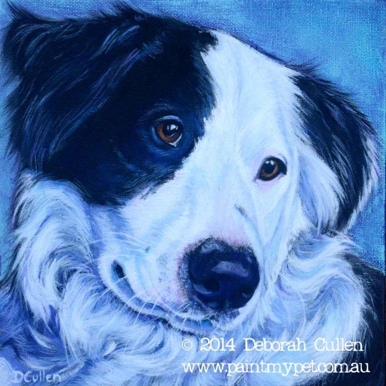 Black and white Border Collie portrait