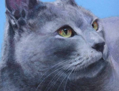 Alexander – Russian Blue Cat Portrait