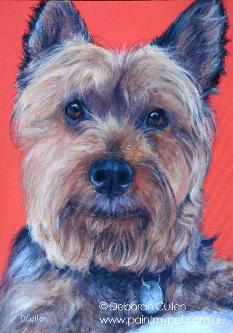 Silky Terrier Pet Portrait