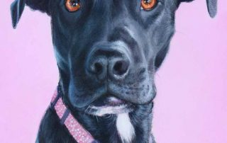 Labrador-staffy X pet portrait