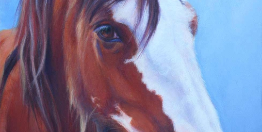Portrait of a Clydesdale horse