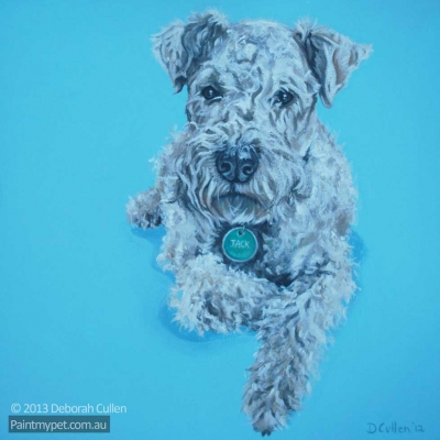 Dog Portrait of a Lakeland Terrier
