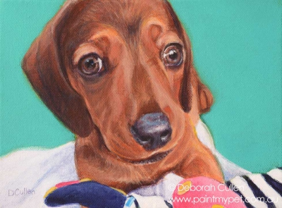 Miniature Dachshund dog portrait