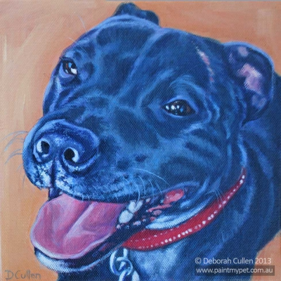 Pet Portrait of a Staffordshire Bull Terrier