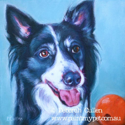 Pet portrait of a Border Collie