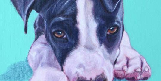 American Staffordshire Terrier Portrait