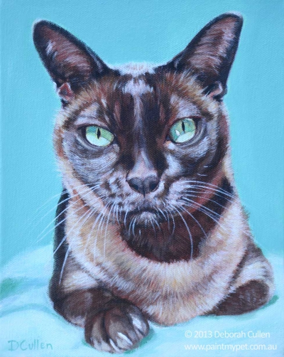 Brown Burmese cat pet portrait
