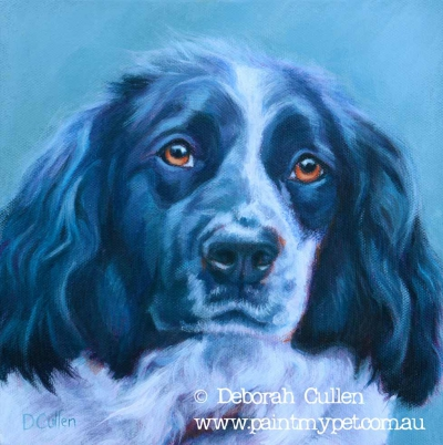 Pet Portrait of a Border Coller C Springer Spaniel