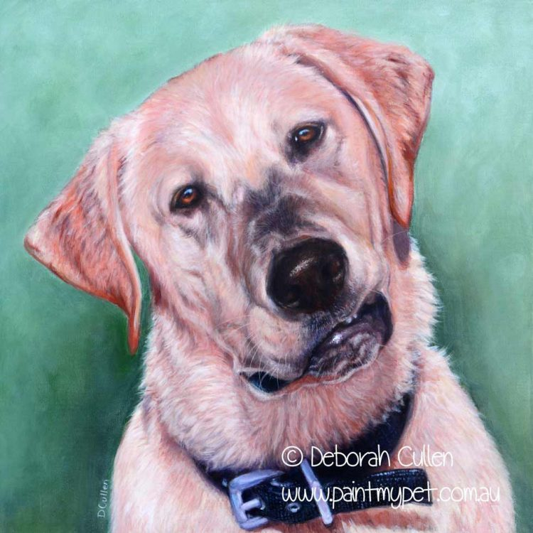 Golden Labrador pet portrait