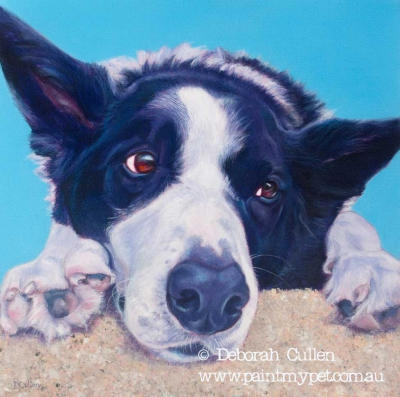 Border Collier pet portrait