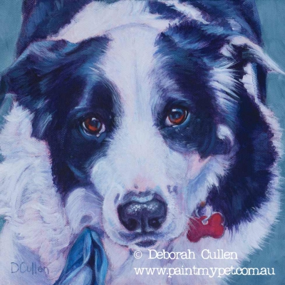 Border Collie Dog Portrait