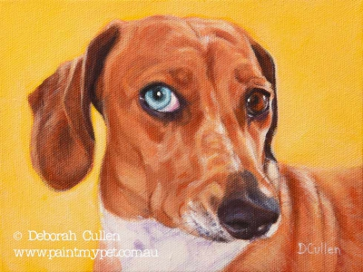 Mini Dachshund pet portrait