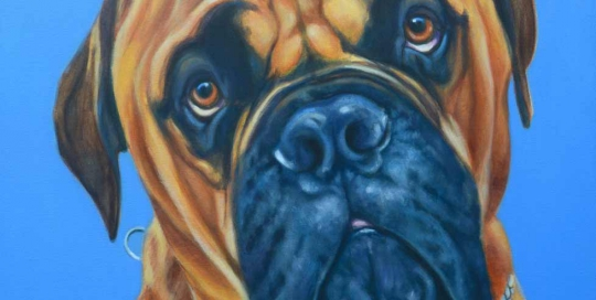 Bullmastiff pet portrait
