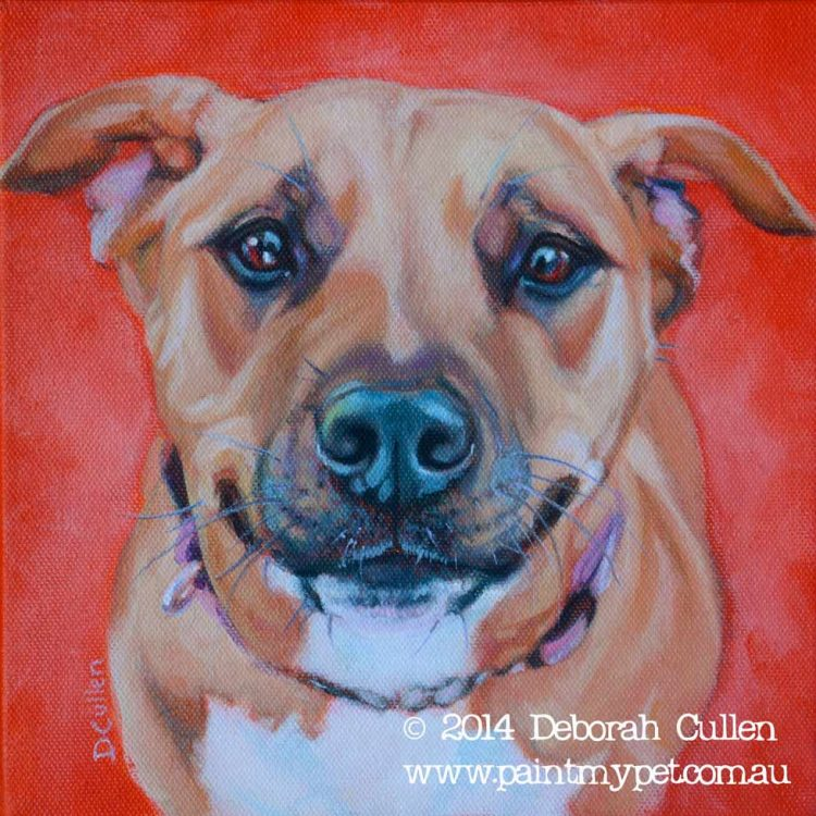 Dog portrait of a Staffordshire Bull Terrier X
