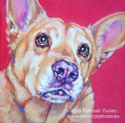 Kelpie dog portrait