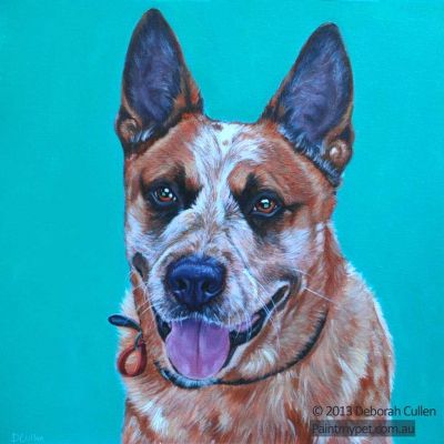Dog Portrait of a Red Heeler
