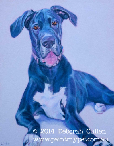 Pet Portrait of a Great Dane