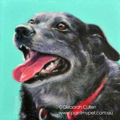 border collie x labrador dog portrait