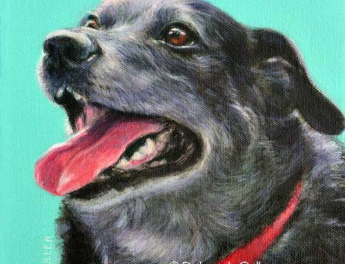 Jet – Border Collie x Labrador Dog Painting