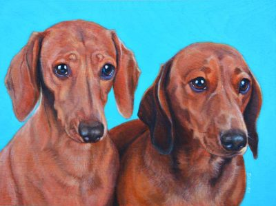 dachshunds dog portrait