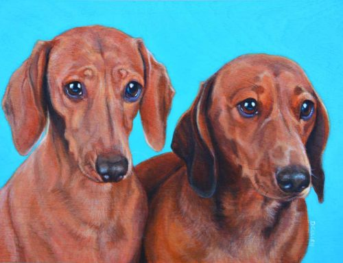 Walter and Neville – Dachshunds dog portrait