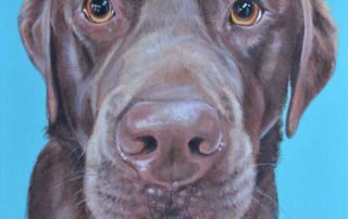 Barney - Chocolate Labrador Dog Portrait