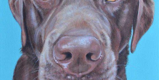 Barney - Chocolate Labrador Dog Portrait